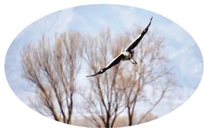 北京启动野生动植物栖息地调查