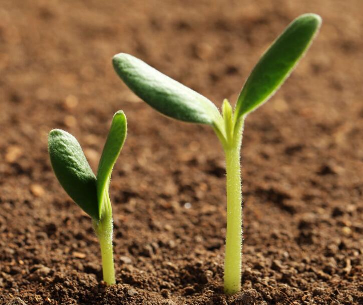 什么叫做肥料?