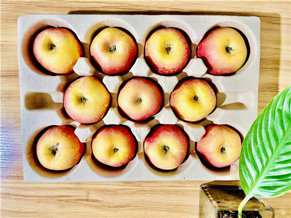 蘋果紙托生產