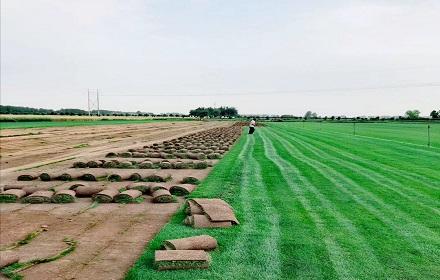 西安园林绿化养护