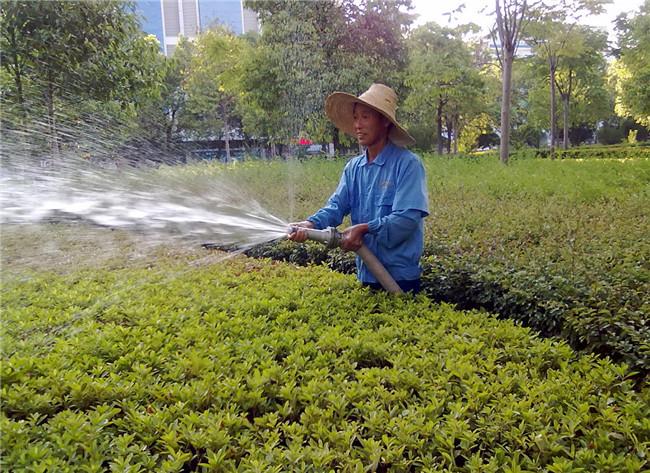 西安绿如锦园林绿化工程