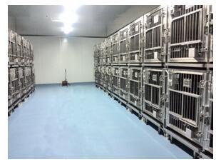四川实验动物笼具