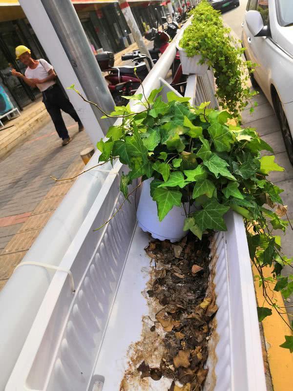 本是道路綠化的花盆,現在花卻不翼而飛,甚至有的變成了垃圾桶,到底為何?