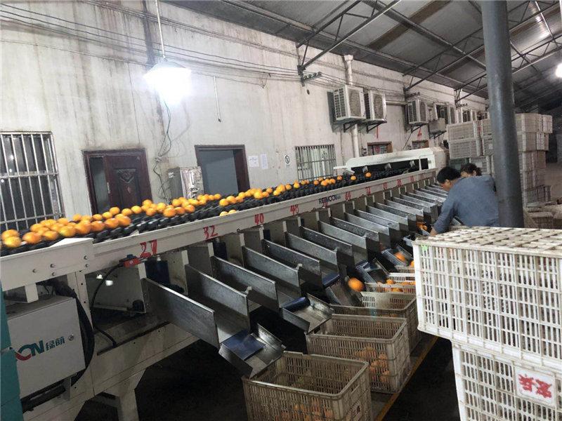 水果打蜡厂
