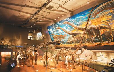 重庆自然博物馆:万千珍藏,见证自然伟力