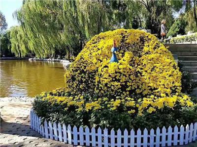 河南菊花造型