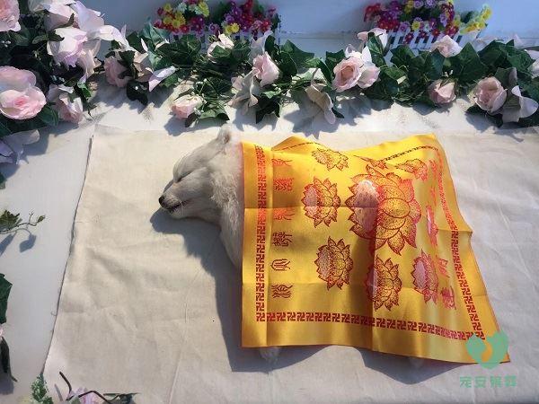 爱犬宠物殡葬