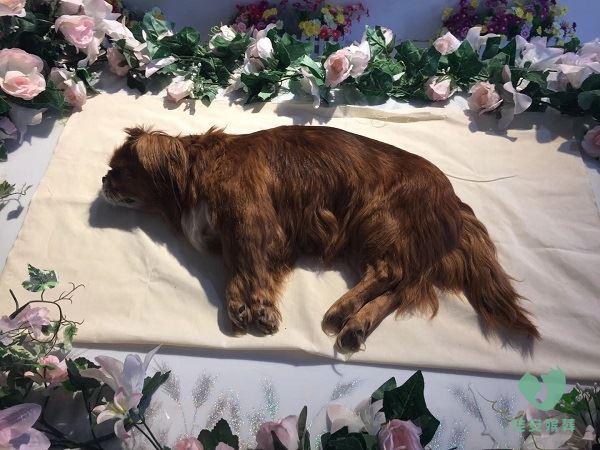宠物殡葬之小动物
