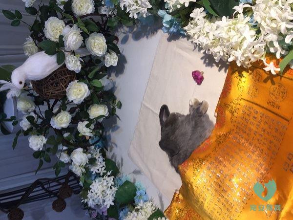 宠物殡葬兔子