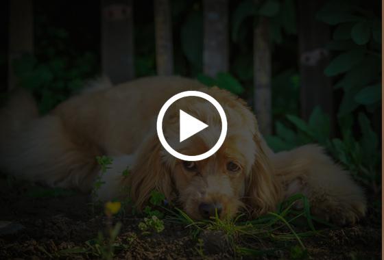 陕西雅典娜宠物墓园有限公司