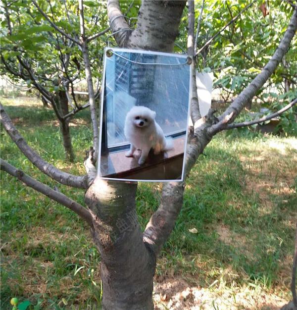 西安環保樹葬