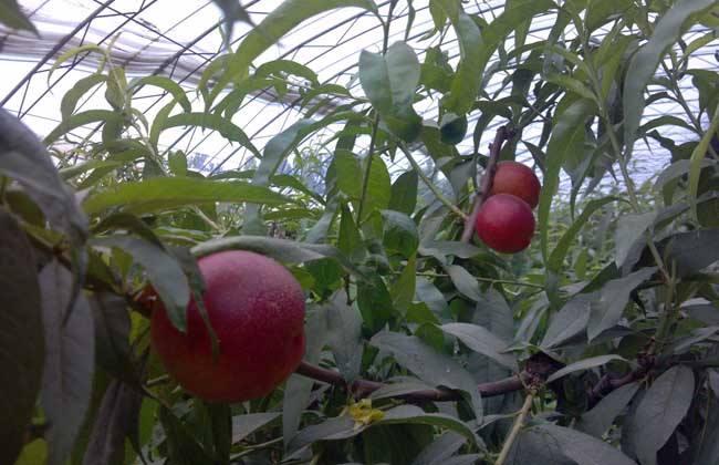 生态农业链