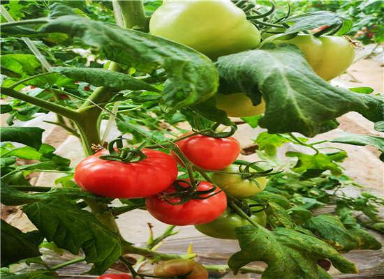 生态农业-有机蔬菜基地