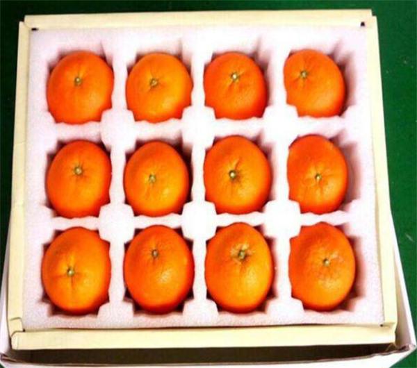 陕西珍珠棉水果包装