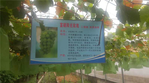 光伏生态农业设施展示