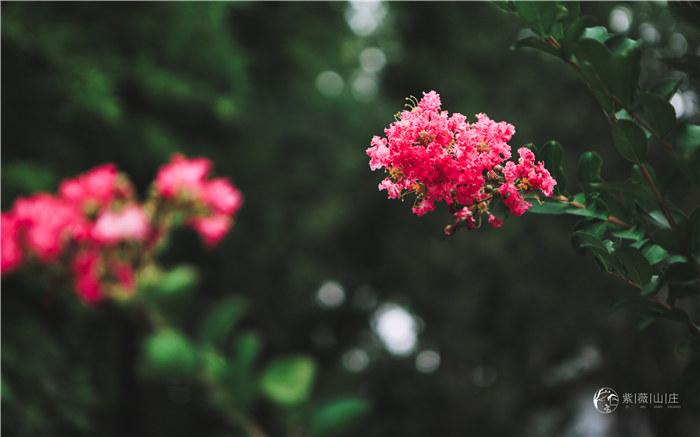 休闲度假-紫薇度假山庄