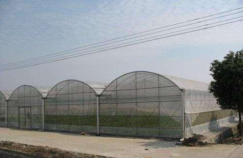河南薄膜温室大棚厂家