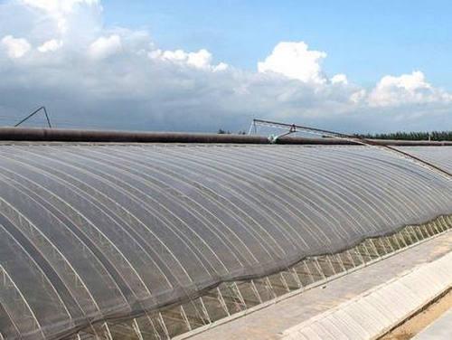 河南日光温室大棚建设