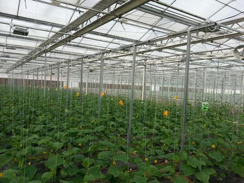 河南玻璃温室大棚案例