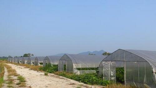 郑州温室大棚工程价格