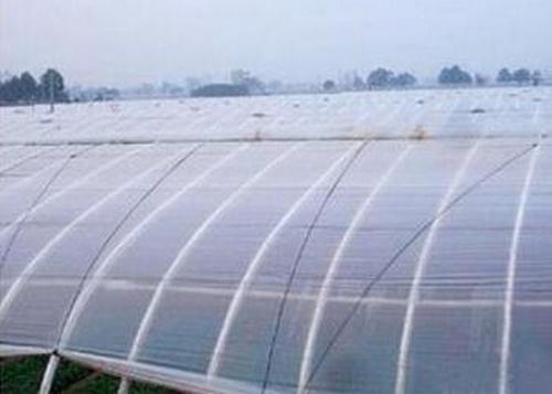 河南薄膜温室大棚工程公司