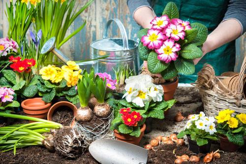 冷死了,告诉你盆景花卉的冬季管理方法!