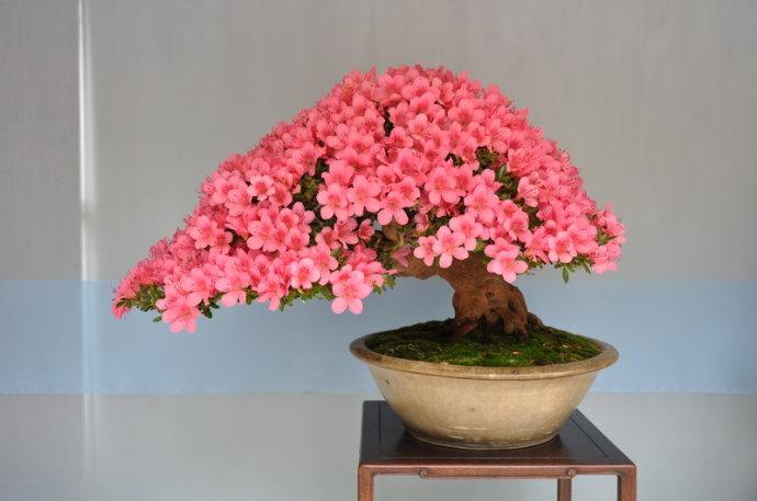 成都鮮花盆景