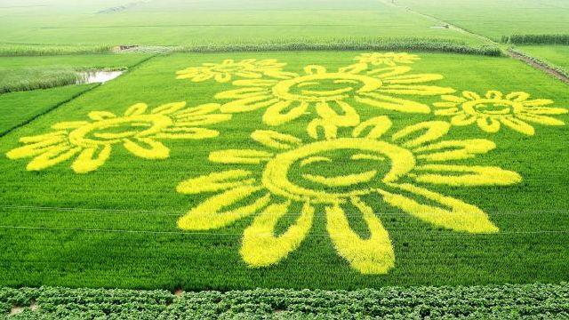 农业博览会