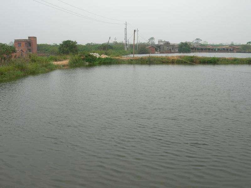水产养殖价格