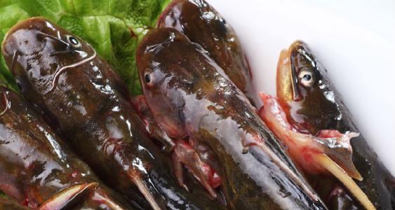 哈素海水產批發銷售