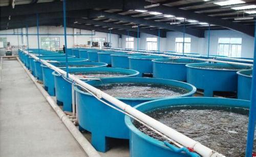 哈素海水产批发销售