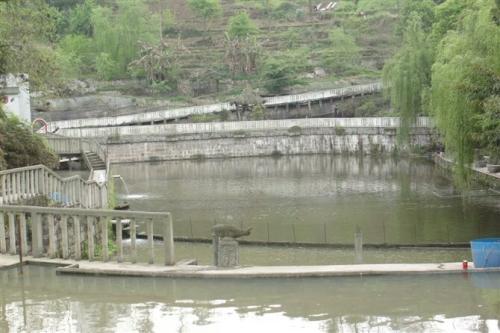 如何提高水产养殖的综合效益