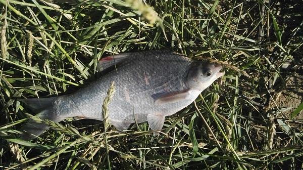 鱼苗养殖方法