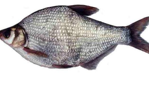 鱼苗养殖厂家
