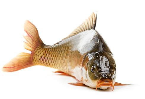 鱼苗养殖批发
