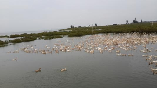 水产养殖批发厂家