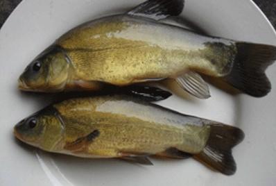 昊海渔业与2814养殖项目合作