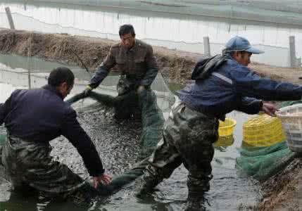 哈素海水产养殖