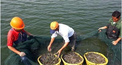 水产养殖销售厂家