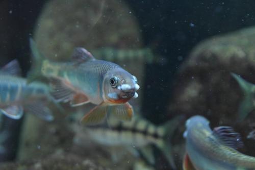 生态鱼饲养