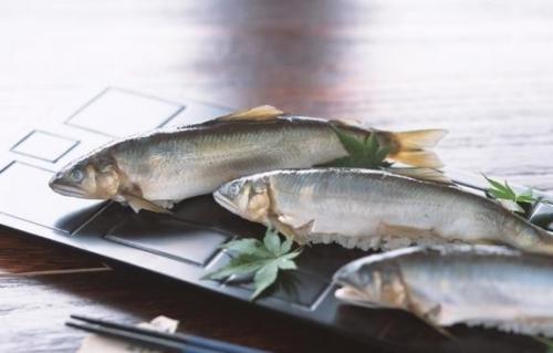 鳙魚養殖廠家