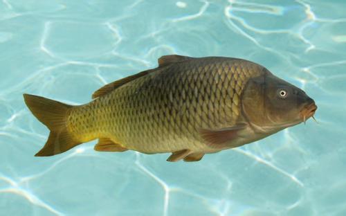 鱼苗养殖对气温的要求