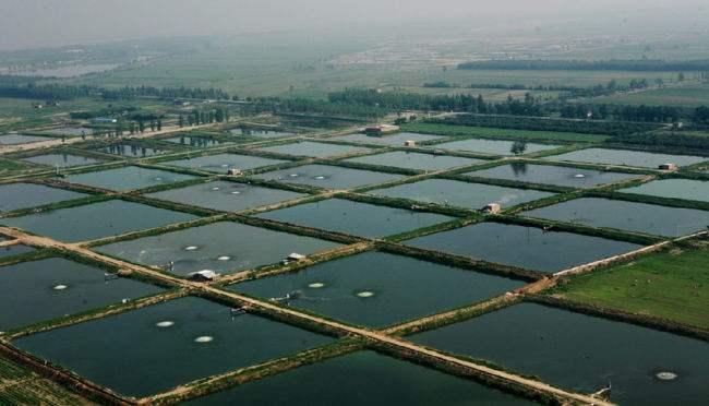 水产养殖厂家