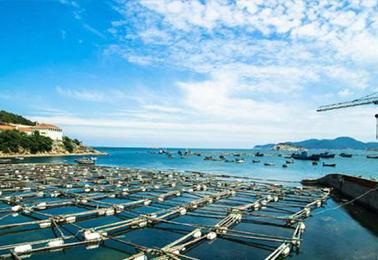 水产养殖过程中鱼病防治十四禁忌,不看等什么?
