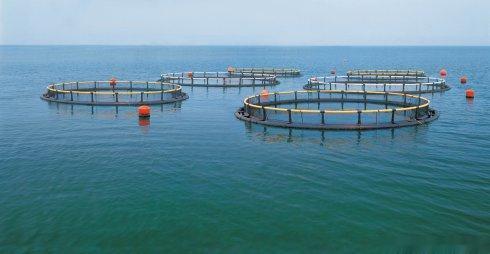 水产养殖寄生虫的防治