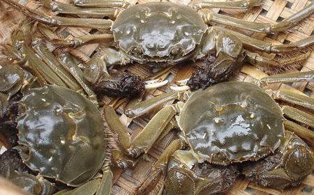 大闸蟹的养殖