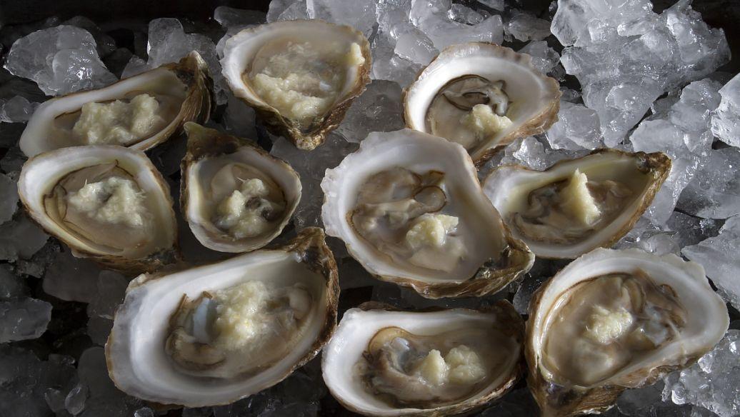 牡蛎的养殖