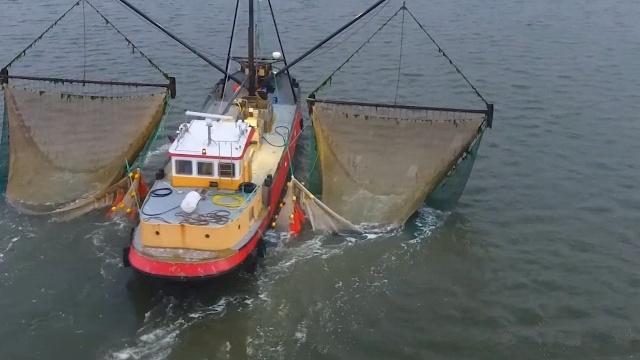 电子脉冲拦鱼机价格