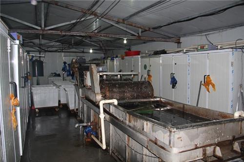 国润豆芽清洗机