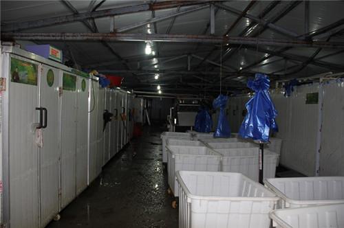 河南大型豆芽生产线生产